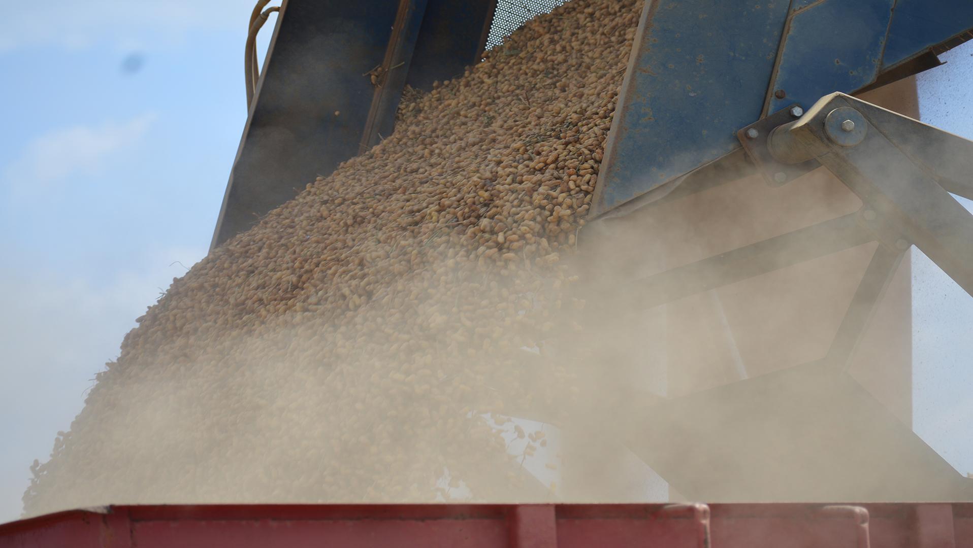 2020 Estimated Peanut Production for Alabama Released