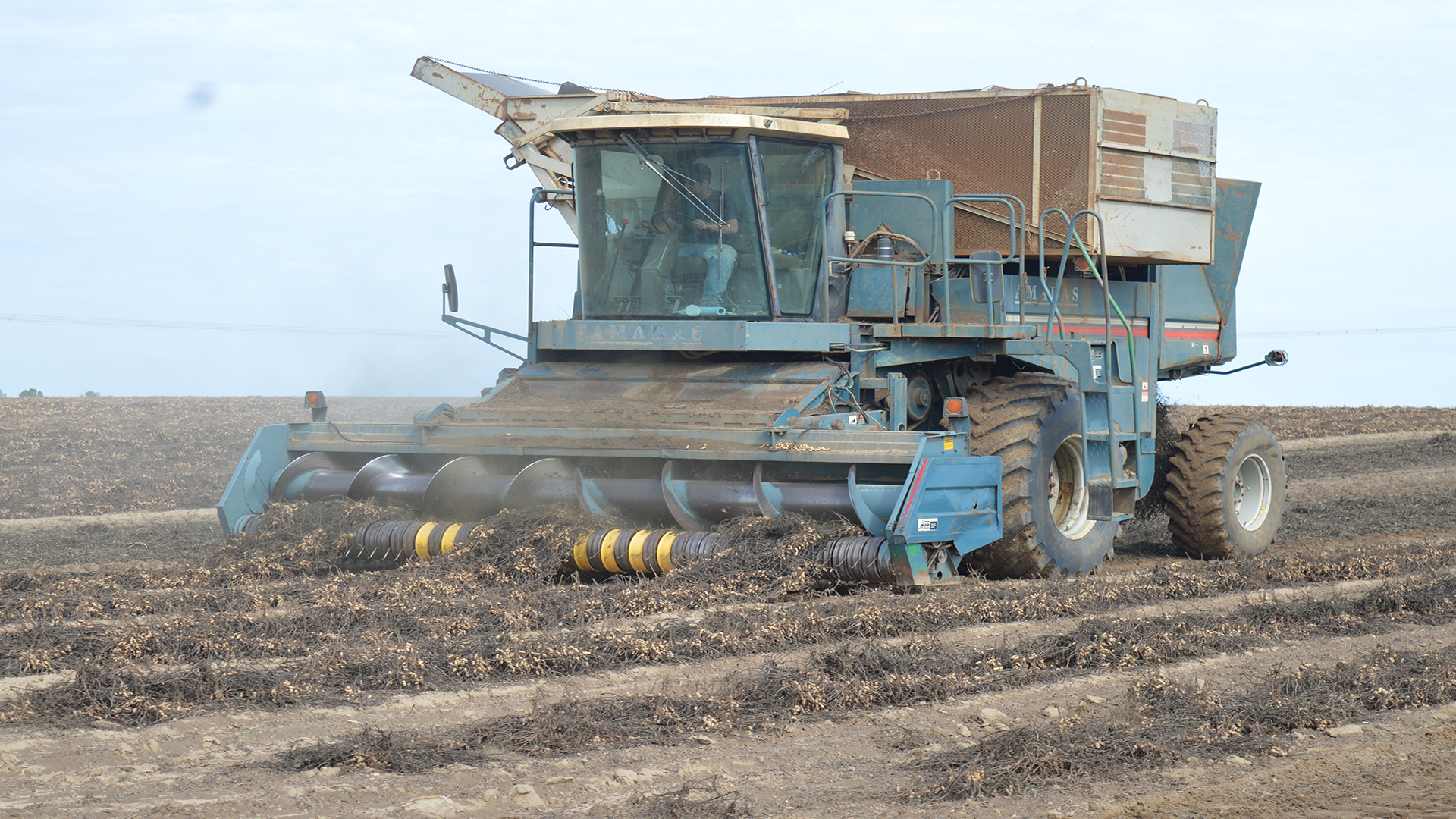 Adams Shares Look At Peanut Harvest In A 360-degree Virtual Tour