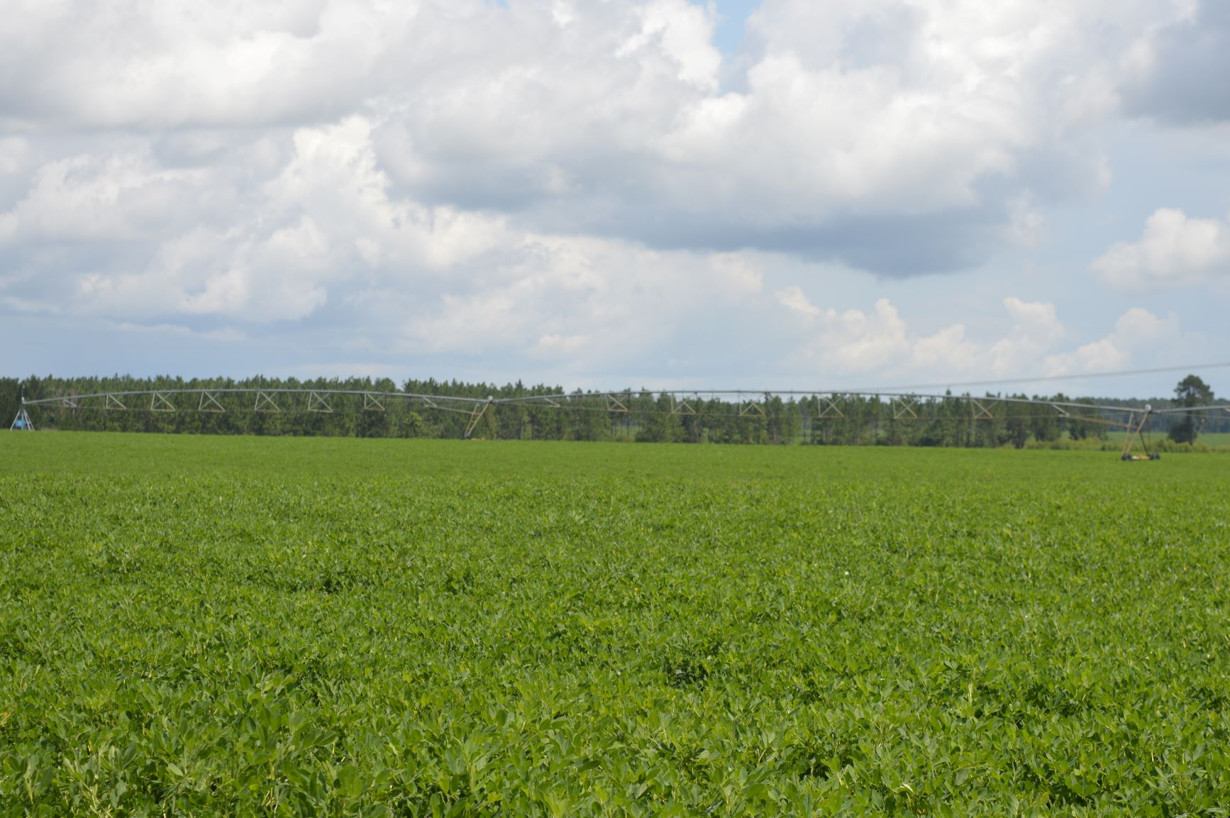Weed Management Tours for Peanuts and Cotton