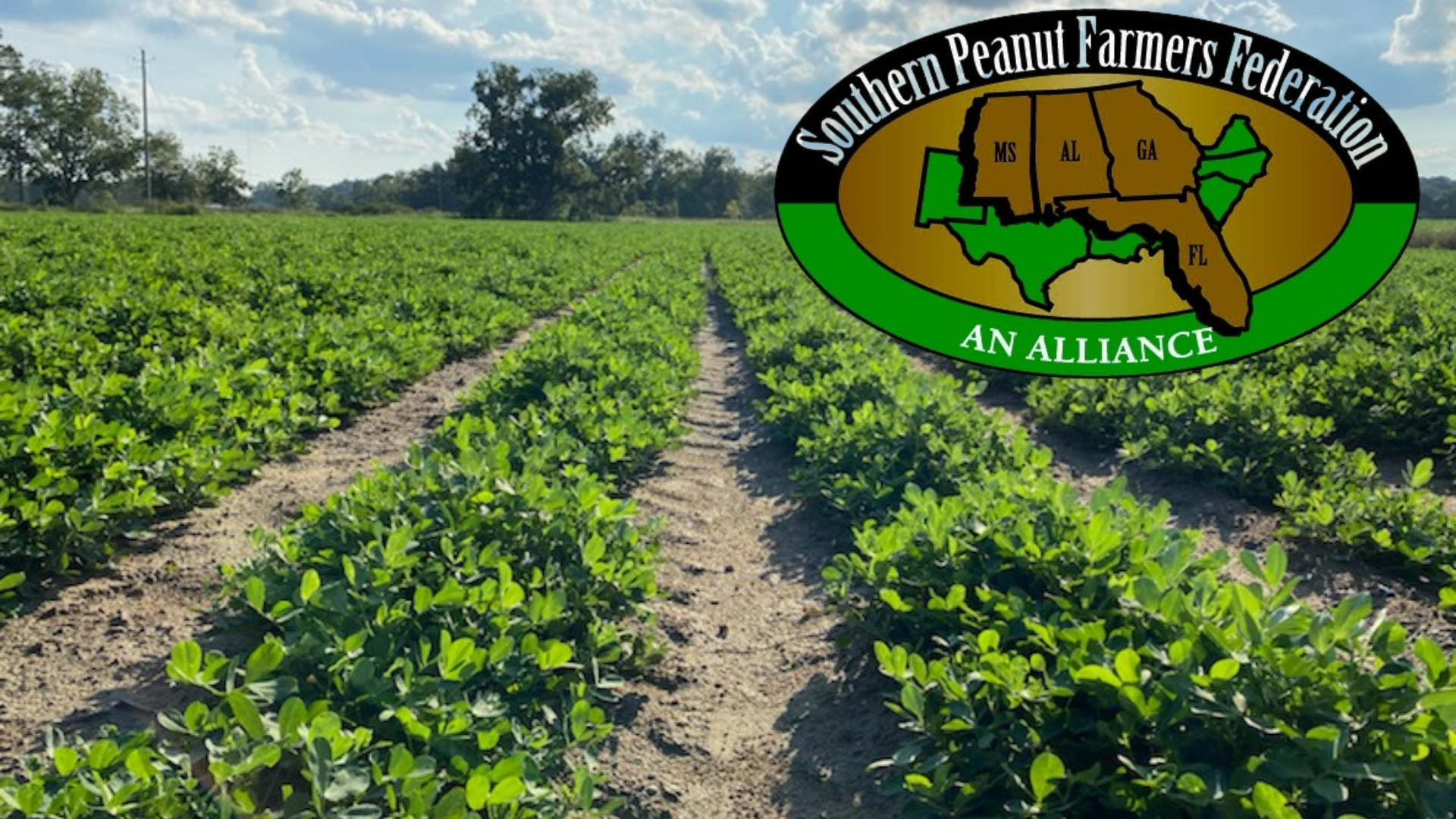 Applications are now being accepted for Peanut Leadership Academy Class XII